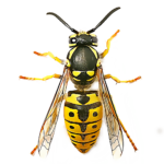 Swift Wasp Solutions